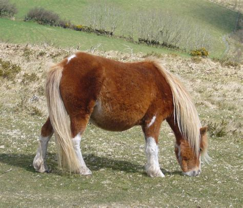 Pony Pictures