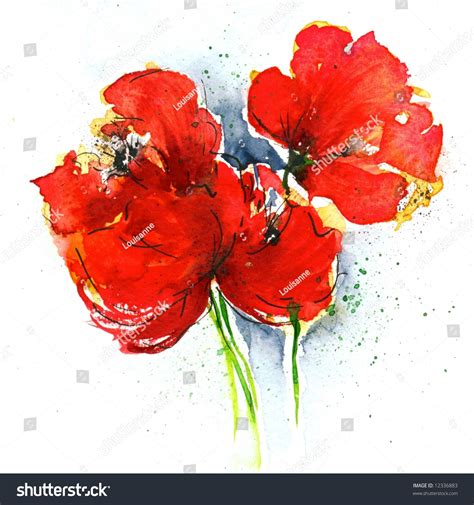 floral painted poppy illustration on white stock illustration 12336883