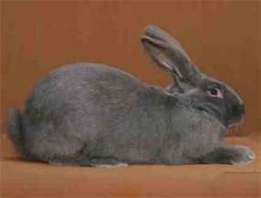 Rabbit Hutches World American Rabbits Usa Rabbit Breeders