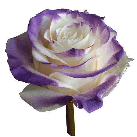 Kotak Akrilik Bunga Mawar Ungu Purple Preserved Flower novelty roses archives farms