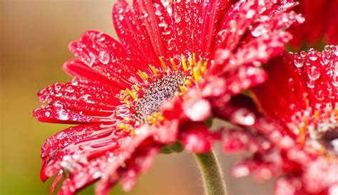 foto bellissime fiori immagini di fiori 47 foto sfondi hd bonkaday