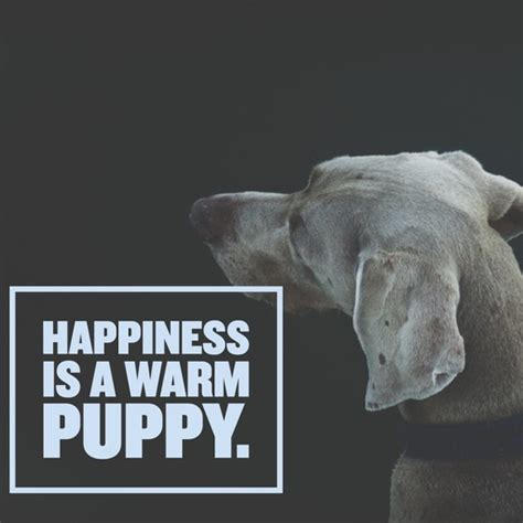 happiness is a warm puppy quotes 25 sayings only will understand