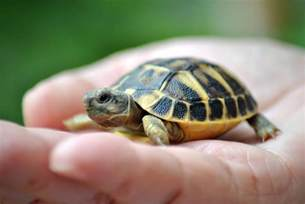 Little Boy Bathroom Ideas names for pet turtles and tortoises