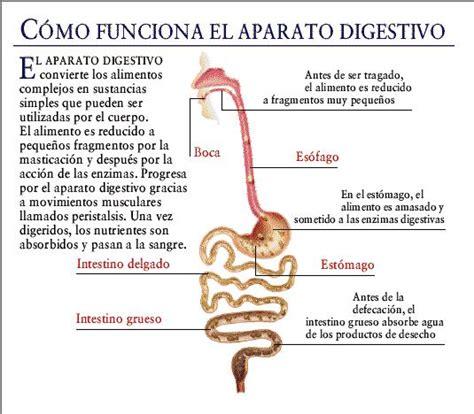 digestivo images aparato que funcion cumple el sistema picture qu 233 es el sistema digestivo sistema digestivo