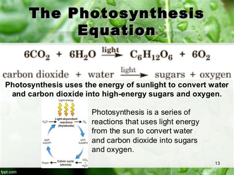 In Addition To Light And Chlorophyll Photosynthesis Requires by 8 2 Photosynthesis An Overview