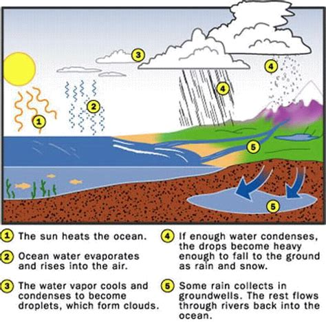 water cycle diagram with explanation class v science water cycle image