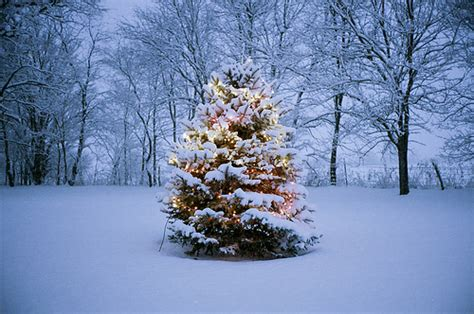 christmas tree in the snow pictures photos and images