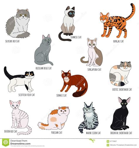 types of cats cat breeds thinglink