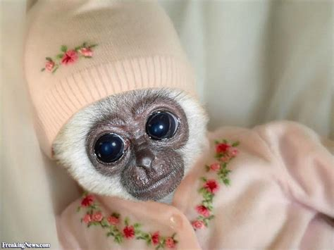 Cute Baby Monkey Pictures   Freaking News