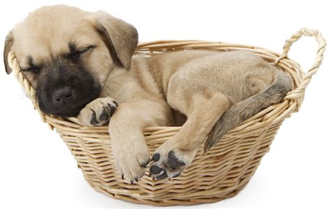 sleep aid for dogs aid kit homeopathic remedies for emergency care