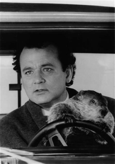 groundhog day driving don t drive angry groundhog day books