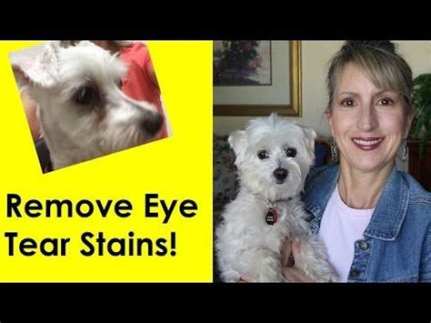 yorkie tear stain remover best 25 tear stains ideas on baby maltese snacks and puppy care
