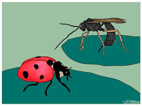 How To Get Rid Of Ladybugs Inside My House by 11 Best Gardening Tips Images On Gardening