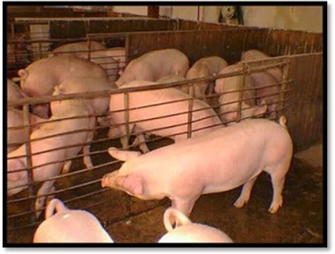 las fotos m 225 s de corrales en instagram una misi 243 n japonesa visitar 225 m 233 xico para certificar que no hay fiebre porcina
