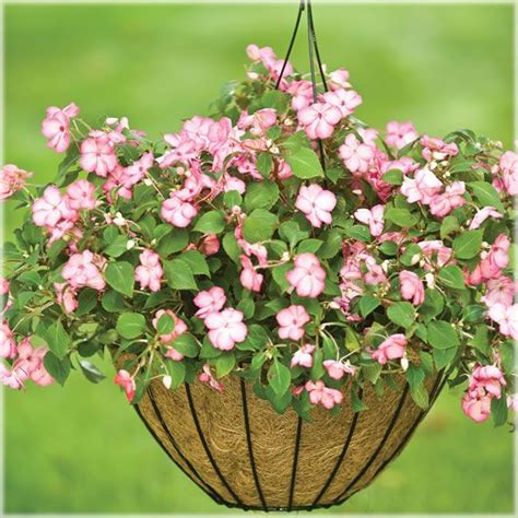 Welcome Garden Planter by Cobraco Welcome Garden Hanging Basket Planter Outdoor