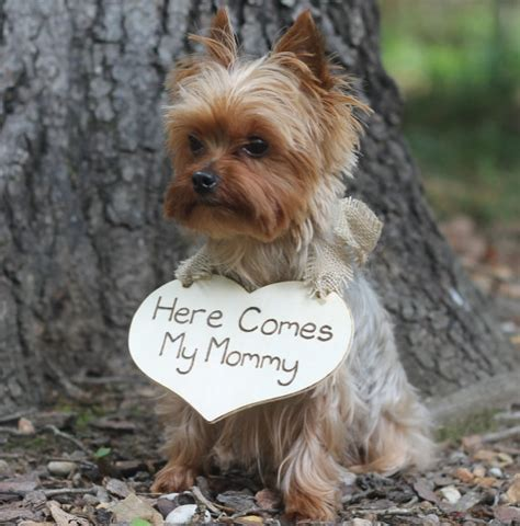 puppy wedding puppy sign here comes my flower ring bearer sign rustic wedding
