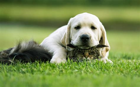 and puppy cat and puppy cats wallpaper 38515897 fanpop