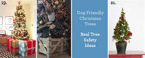 pet friendly christmas tree alternatives safe trees when santa meets the health safety puppy tales