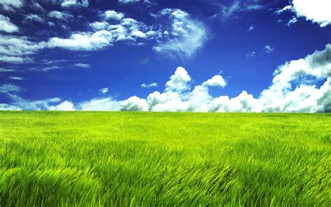 Grass L by Green Grassl Wallpapers Wallpapers Hd
