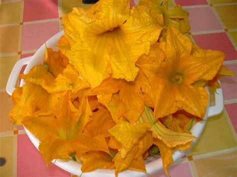 foto fiori di zucca ricette con fiori di zucca
