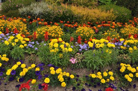 jardins fleuris images