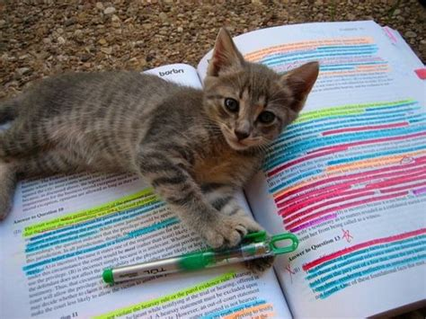 cat exam sections i legit searched quot bar exam quot on pinterest new low cute