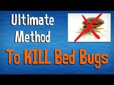 best way to kill bed bugs how to kill bed bugs at home by zkp youtube pest