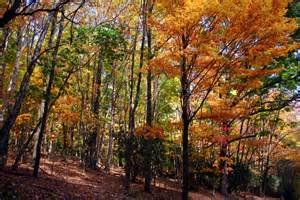colorful fall trees on hiking trail forest foliage