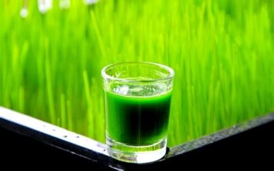 Wheatgrass Detox Thc by 4 Foods That Help You Detox Safely And Gently