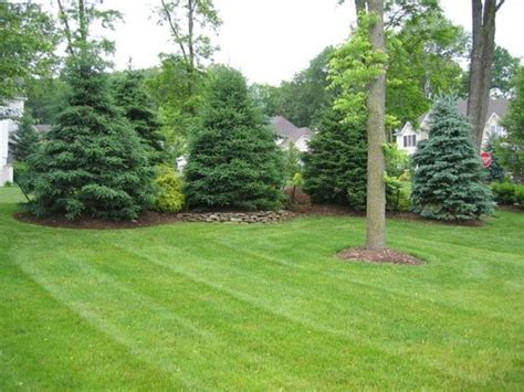 privacy landscaping landscaping and landscaping along fence on pinterest