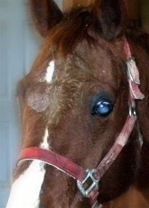 Blindness In Horses turning a blind eye blindness in horses and the choices owners make west virginia mountain