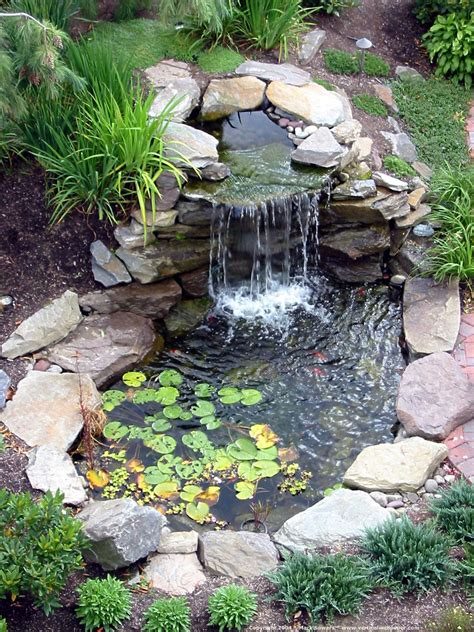 cute water lilies and koi fish in modern garden pond idea with rock line plus attractive
