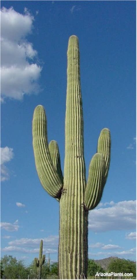 Pretty Plant Names by Walt Whiteman S World Death By Cactus A Prickly