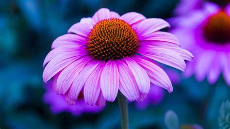 sfondi per desktop fiori sfondi con fiori 45 immagini
