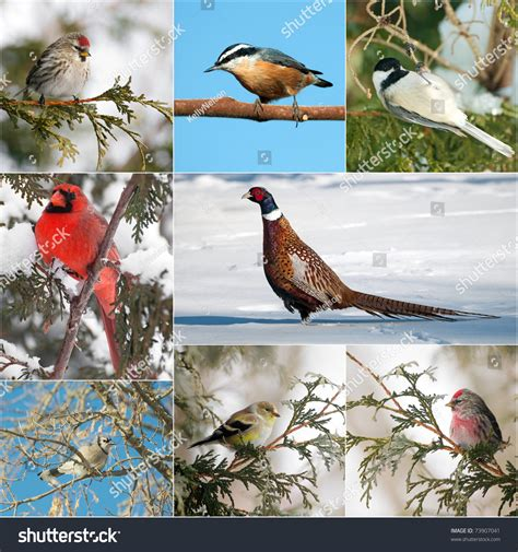 bird north american winter birds collage stock photo