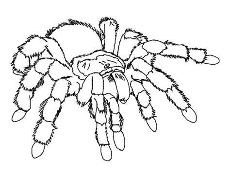 giant tarantula spider coloring page color luna