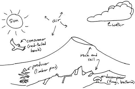 ecosystem diagram ecosystem diagrams diagram site