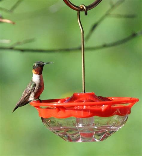 when do the hummingbirds return to upstate new york the