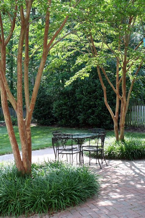 Patio Tree by Crepe Myrtle Underplanted With Liriope Landscape
