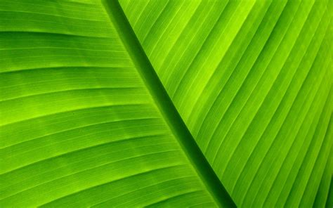 palm leaf wallpaper 71683