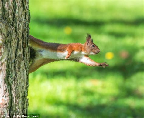 squirrel hung by nuts olumide fafore s he s just nuts for squirrel in variety of poses as he