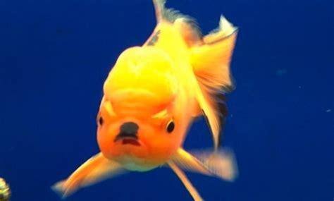 This Fish Looks Like A This Fish Looks Like Sick Chirpse