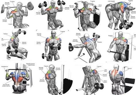 best shoulder building exercises shoulders