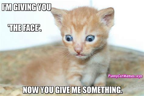 kitten memes    adorable  ignore