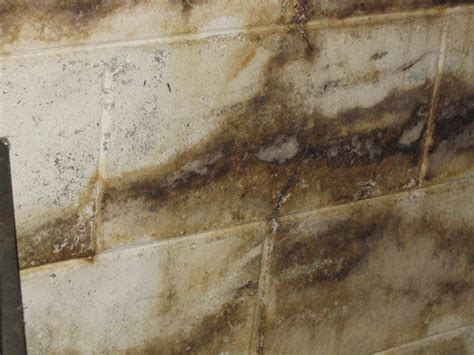 mold in home home mold health problem of mold home mold