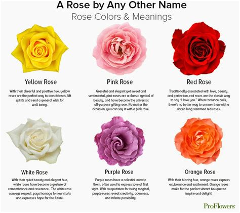 roses colors meaning color chart meanings flower meanings yellow roses