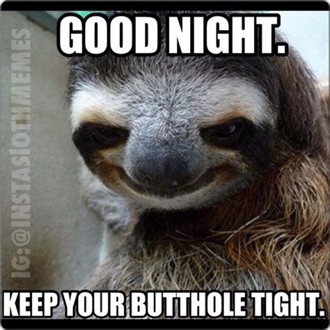 Nighty Night Meme - drunk sloth quotes