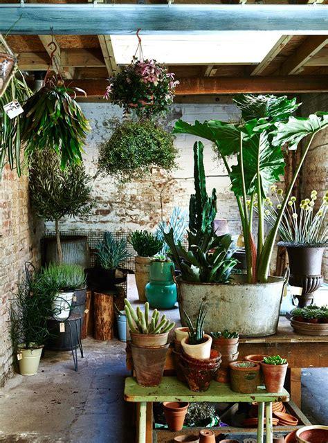 easy ways  create botanical style  home plants