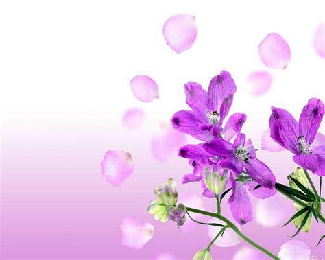 imagenes de flores wallpapers wallpaper flores imagui