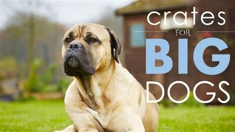 best big dogs best crates for large dogs 5 big comfy ones herepup